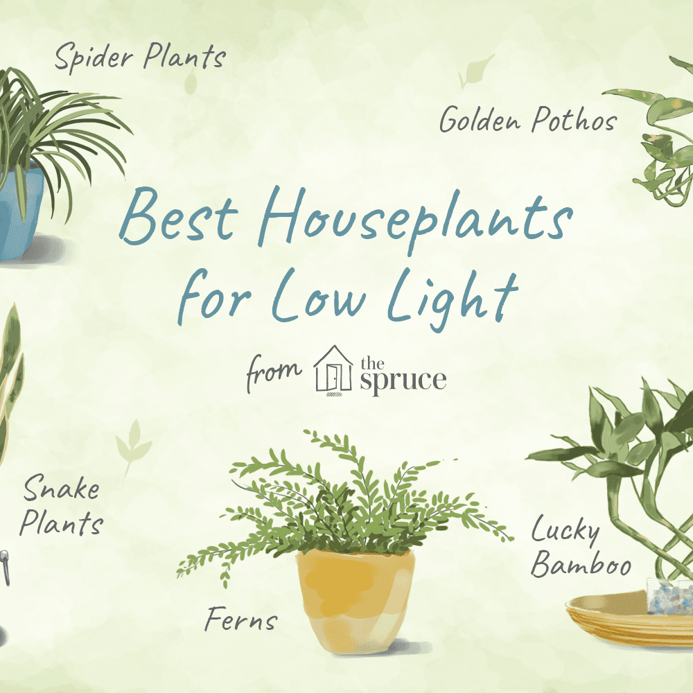 Houseplants For Low Light Conditions