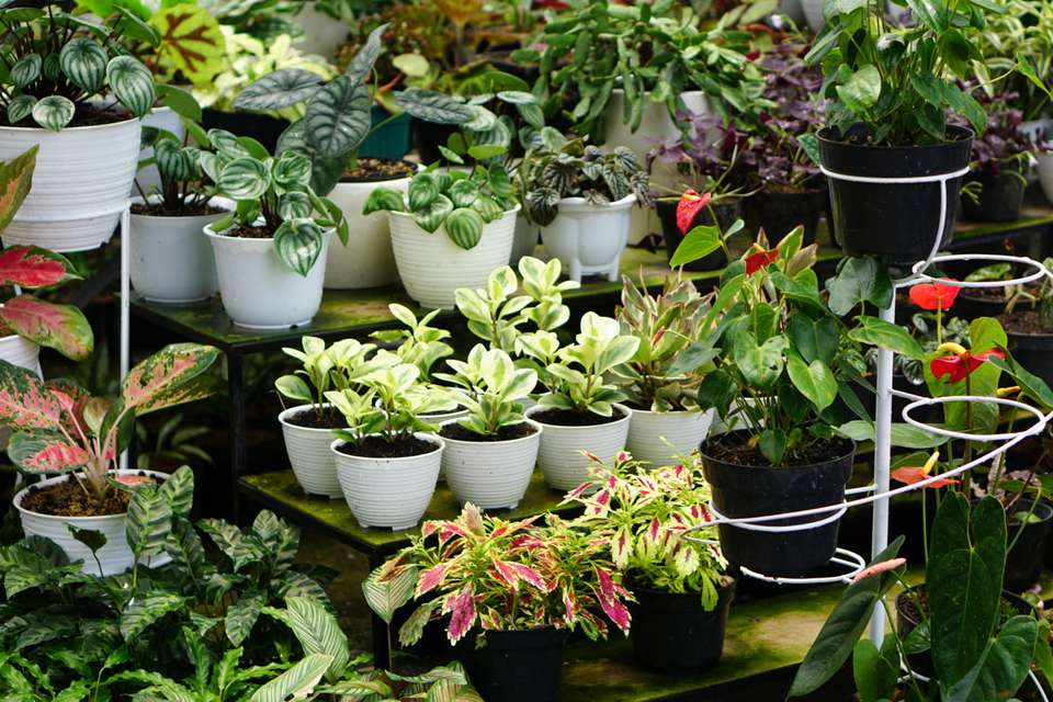 Plant varieties displayed with different garden containers