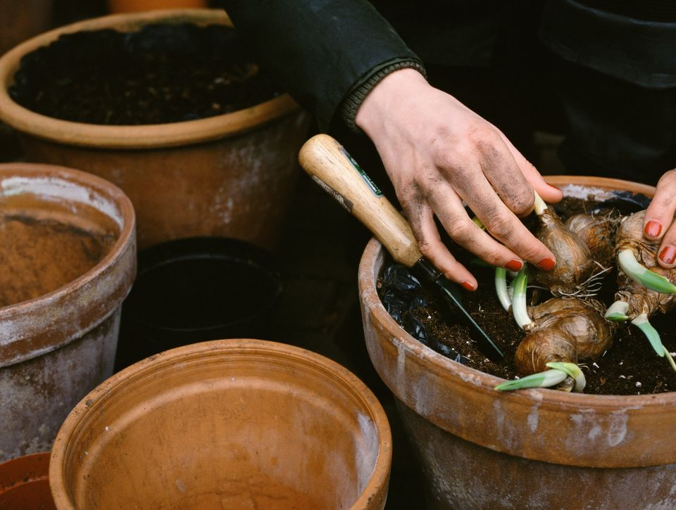 Woman planting spring bulbs in pots.