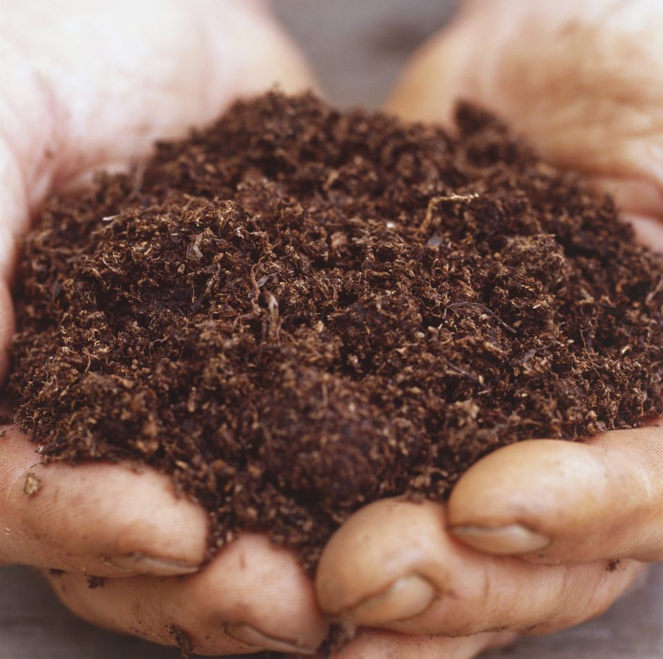 Coir-based compost.