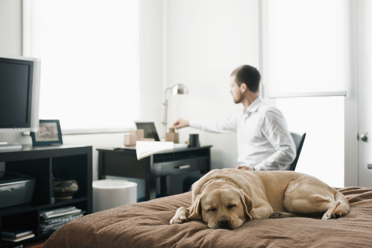 Dog sleeping on a bed in home office bedroom