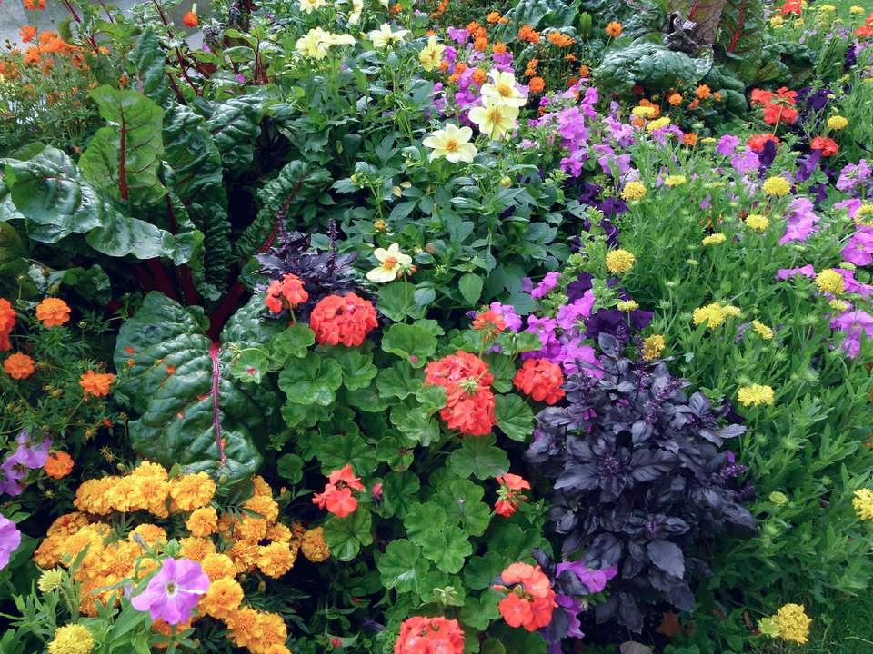 vibrant flower garden