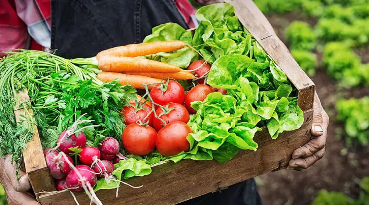 A wooden crate full of vegetables carried by a farmer