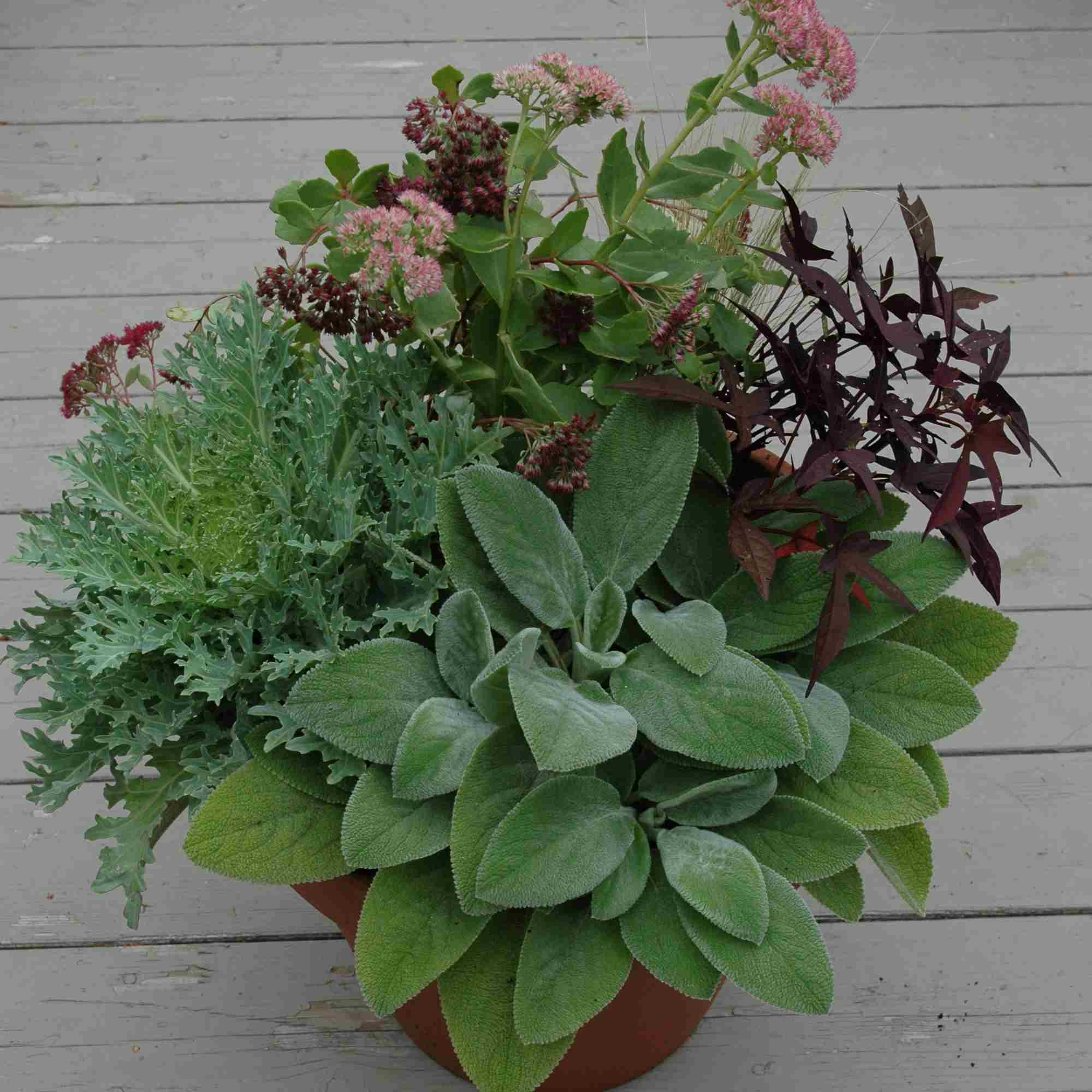 large terra cotta pot with fall plants