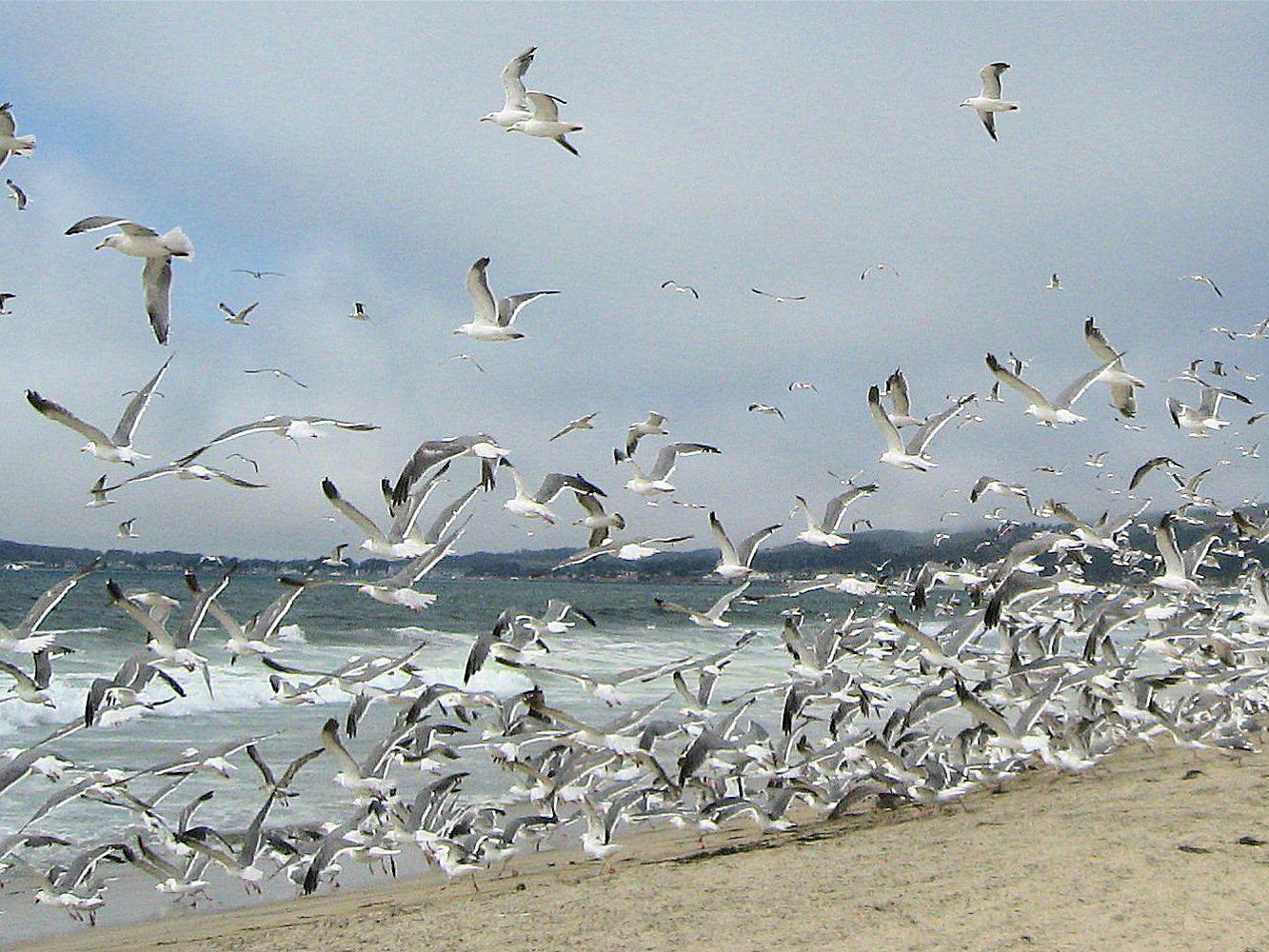 Why Birds Form Flocks