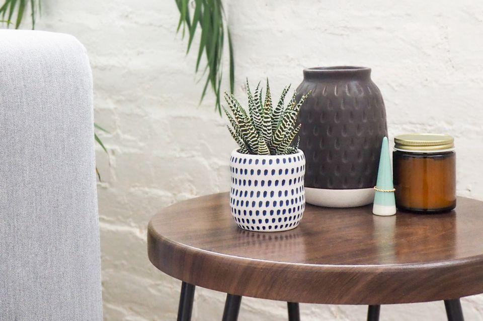 haworthia succulent on a side table