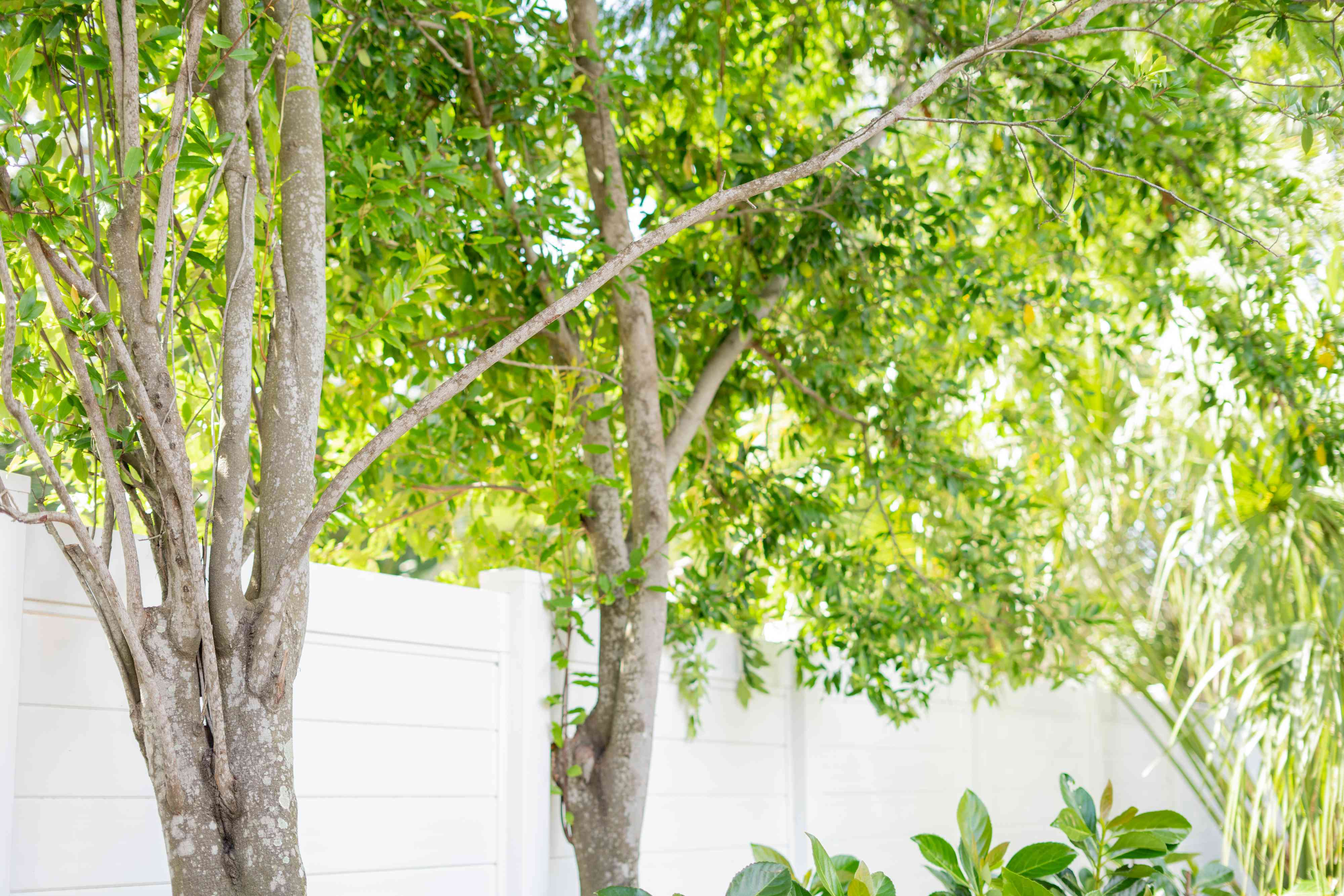 Trees near white fence trimmed for storm protection