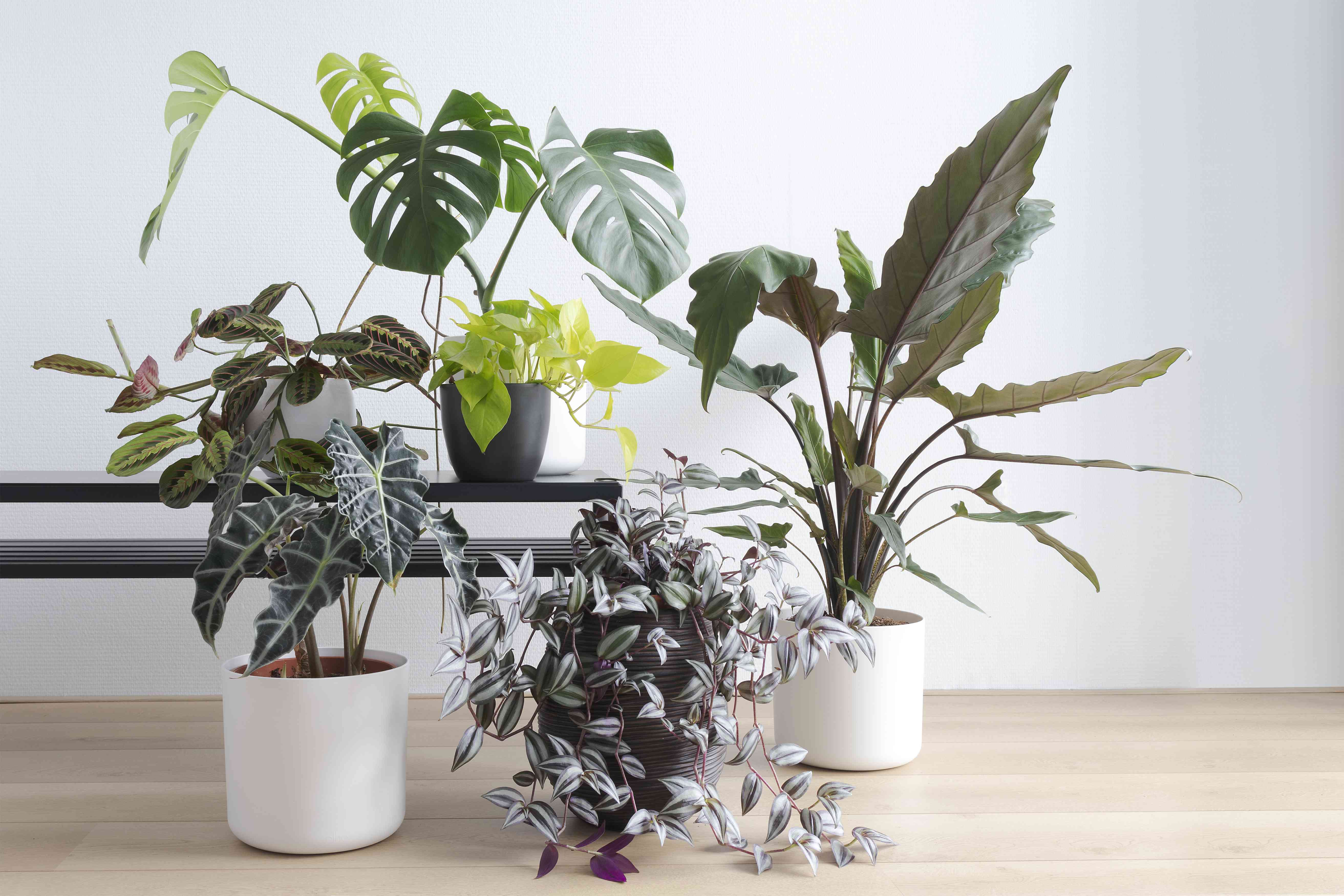 A collection of houseplants on a bench and floor.