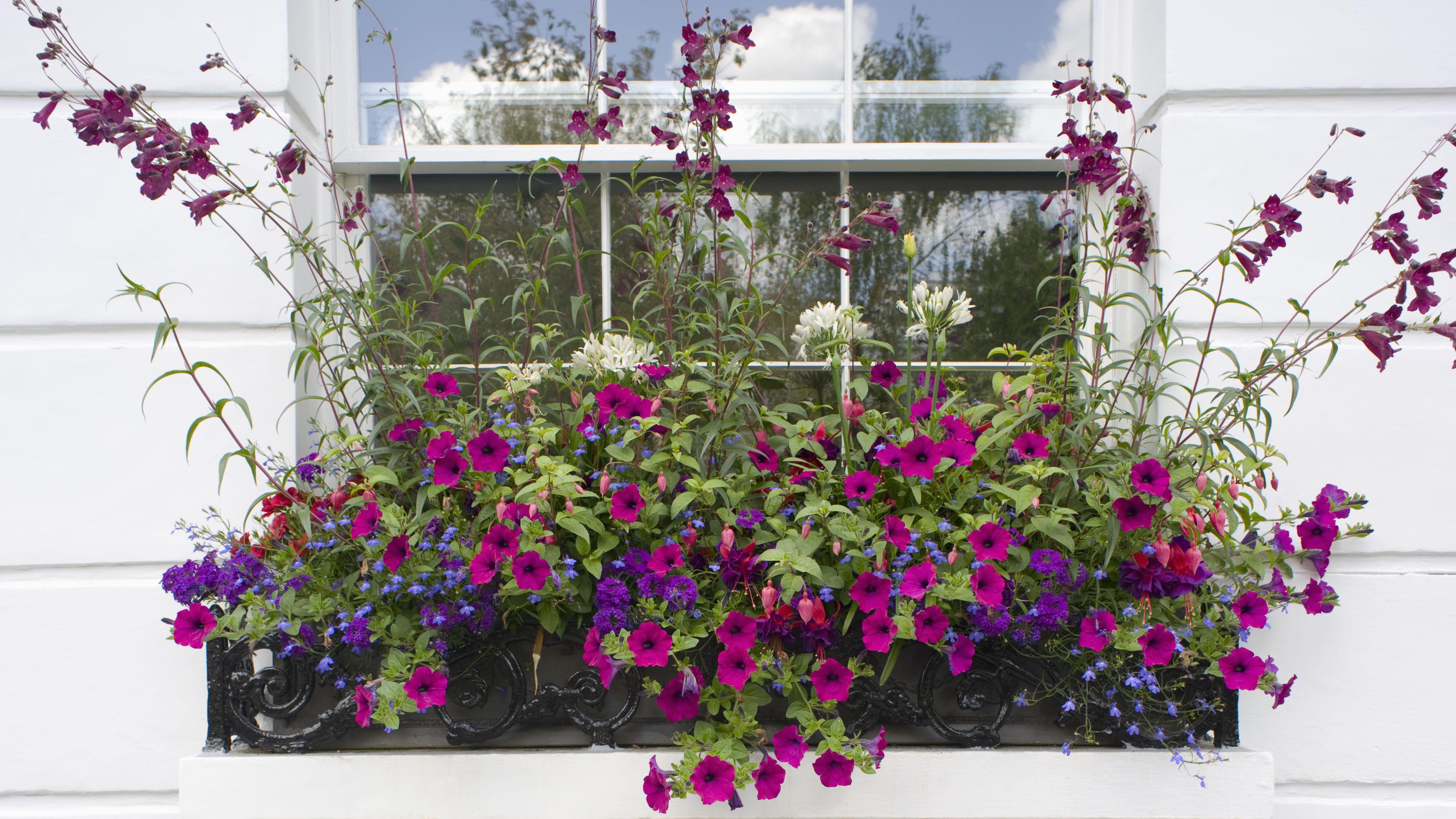 14 Gorgeous Window Box Ideas For Spring