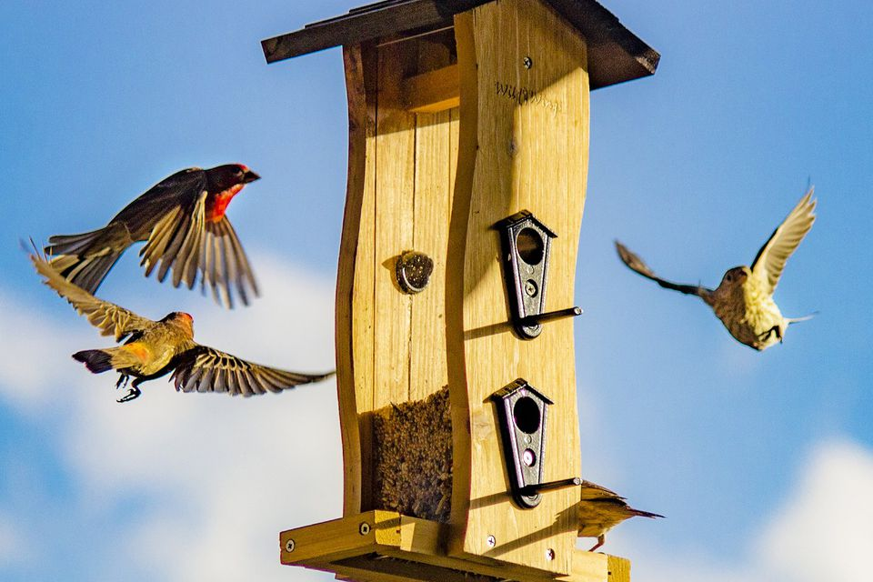 Birds Flying to the Feeder