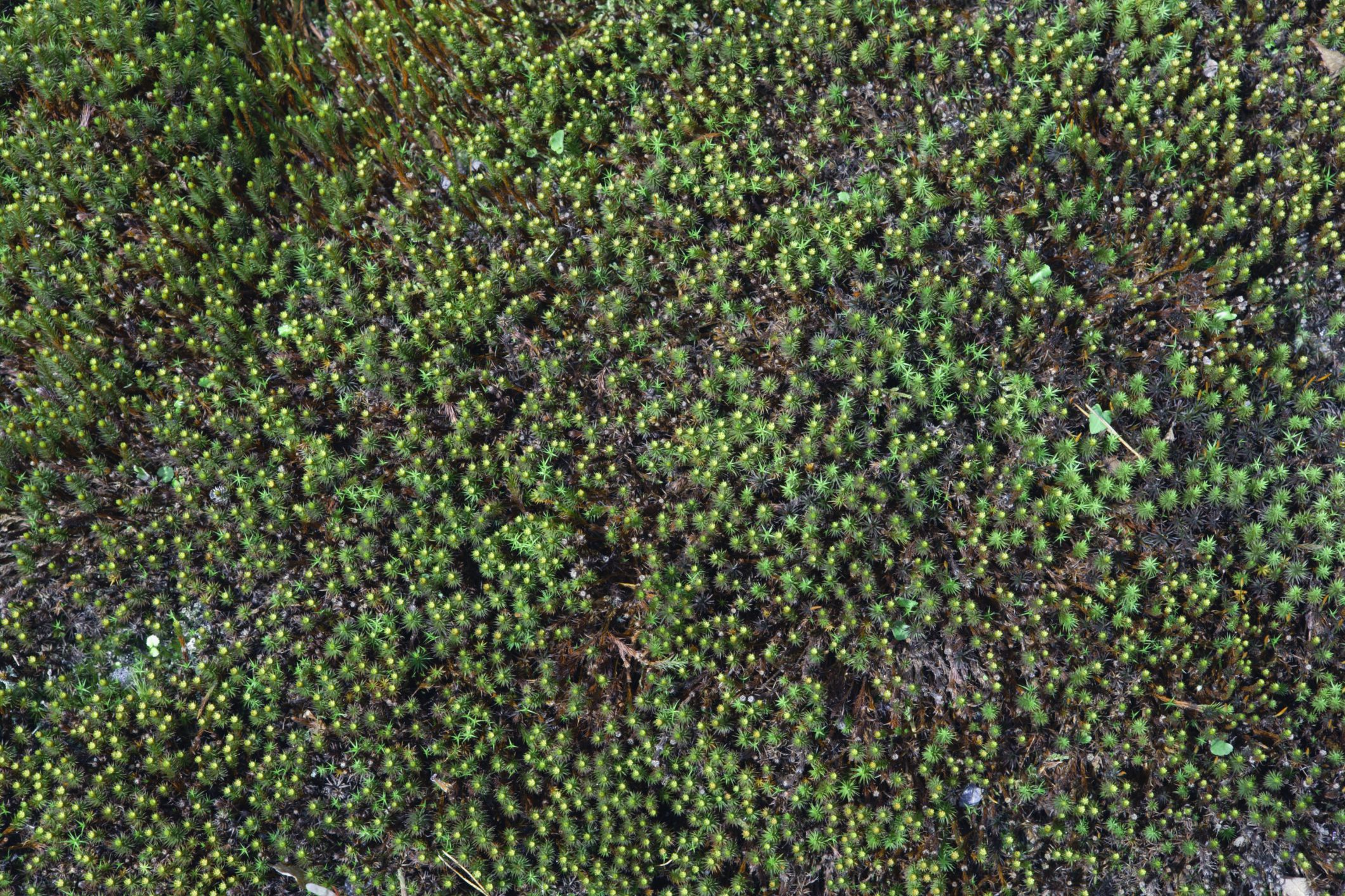 Grow Moss A Natural Groundcover For