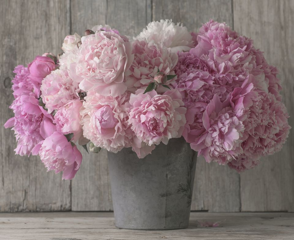 Peonies in a container.