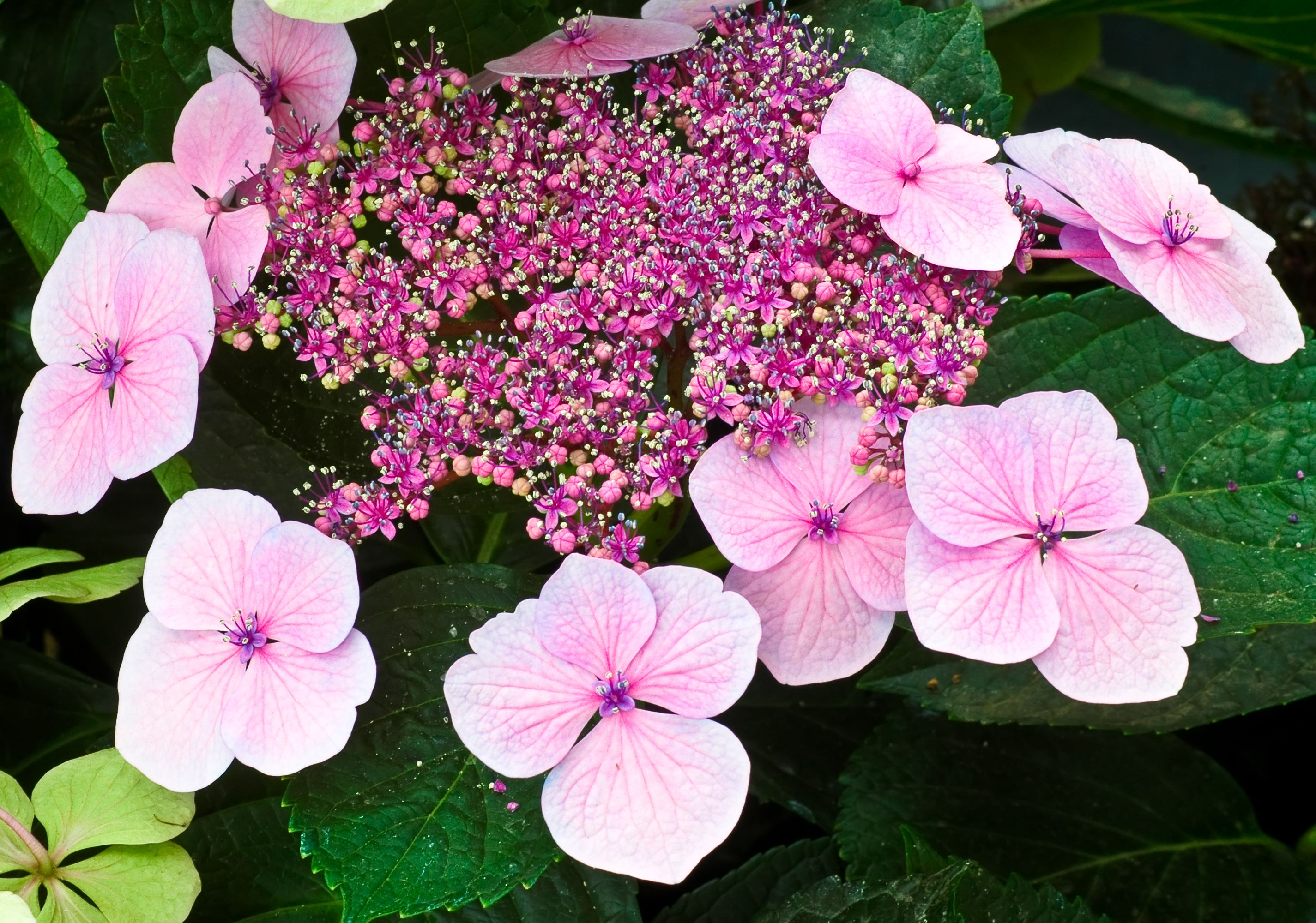 9 Beautiful Types Of Hydrangeas
