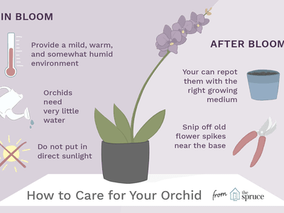 08a6fafb35bb81 Orchid Care Tips for Weeks of Longevity