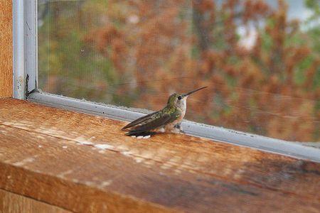 Where Hummingbirds Get Tred