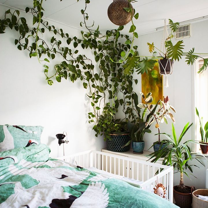 plant vines attached to wall