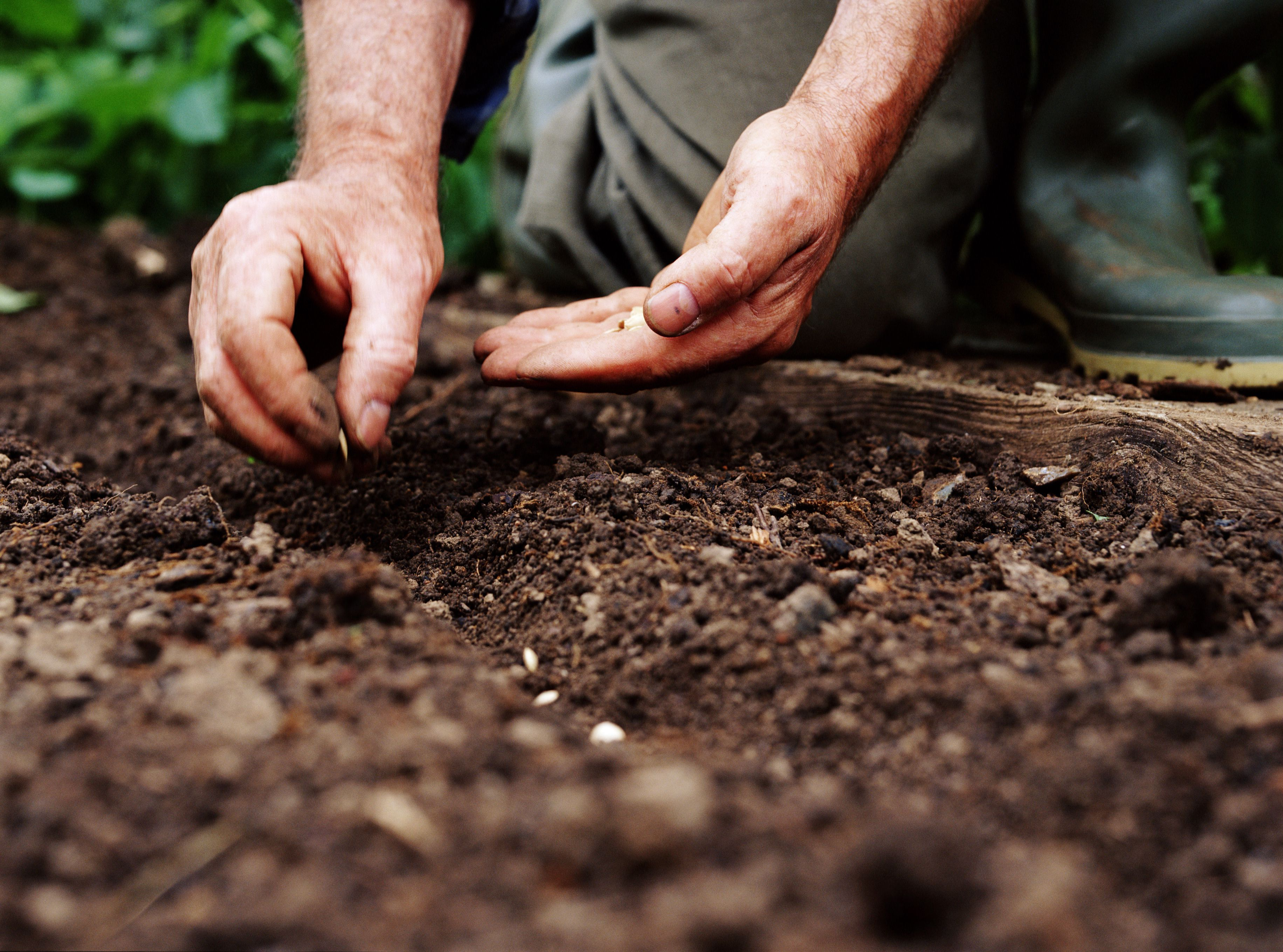 What Is Direct Seeding or Direct Sowing?