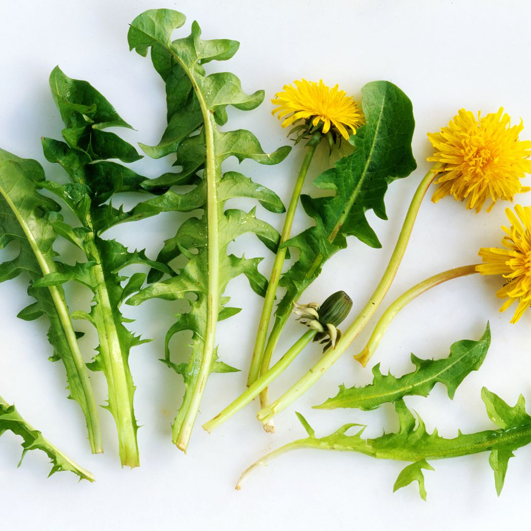 Uses for Common Weeds in Your Garden