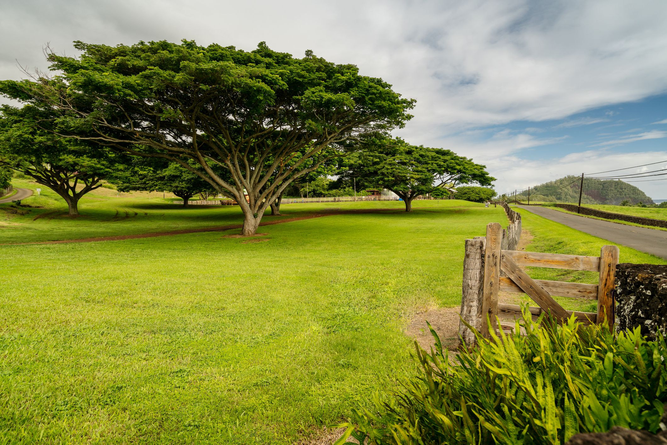 Hana Ranch Tree