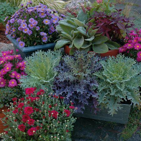 Fall Container Garden Grouping