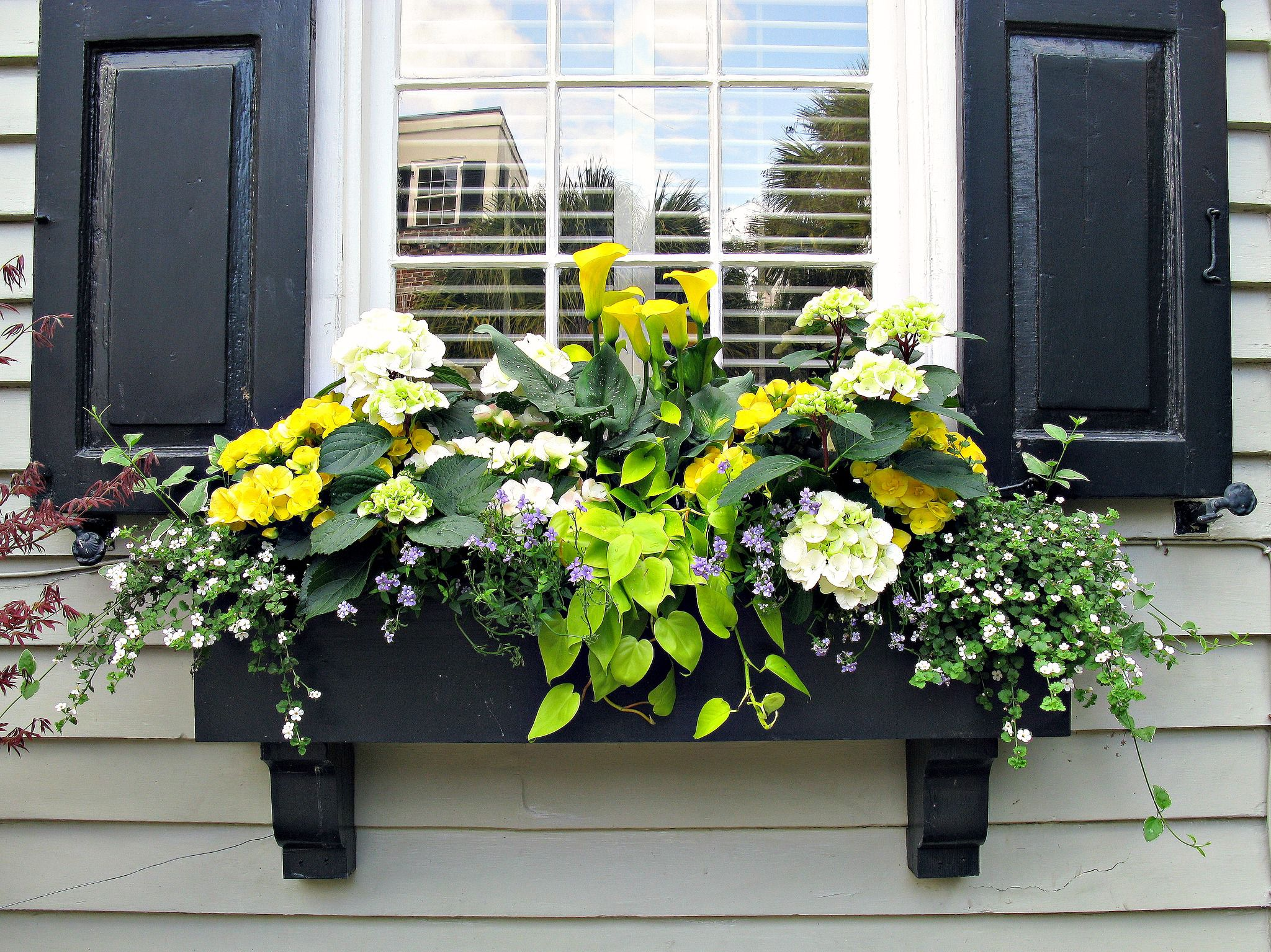 6 Gorgeous Window Box Ideas for Spring