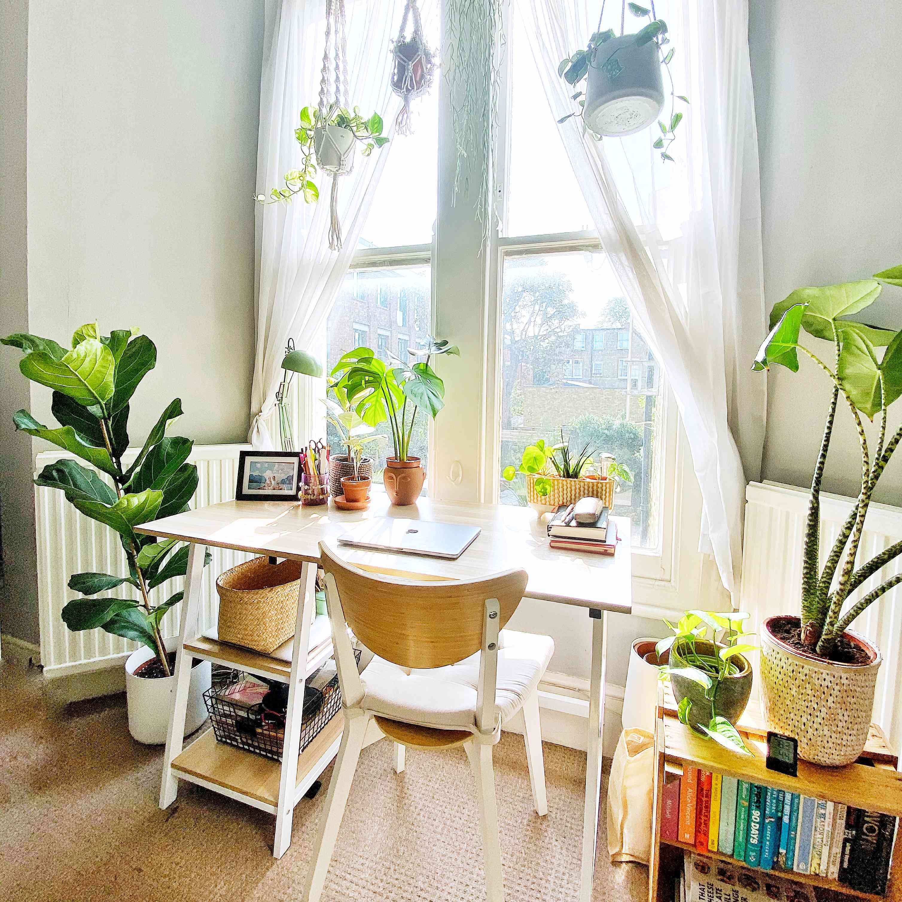 Desk area with Fiddle Leaf Fig