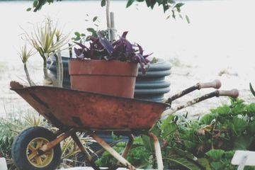 Wheelbarrow and gardening supplies.