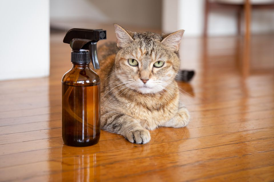 cat near flea repellent
