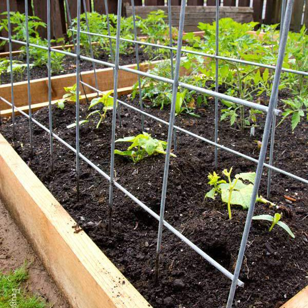 DIY garden trellis with cattle panels