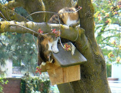 Safe And Easy Shelter For Winter Birds