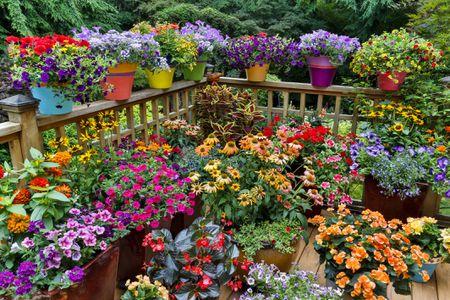 Pleasing 14 Ideas For Flowering Container Gardens Download Free Architecture Designs Scobabritishbridgeorg