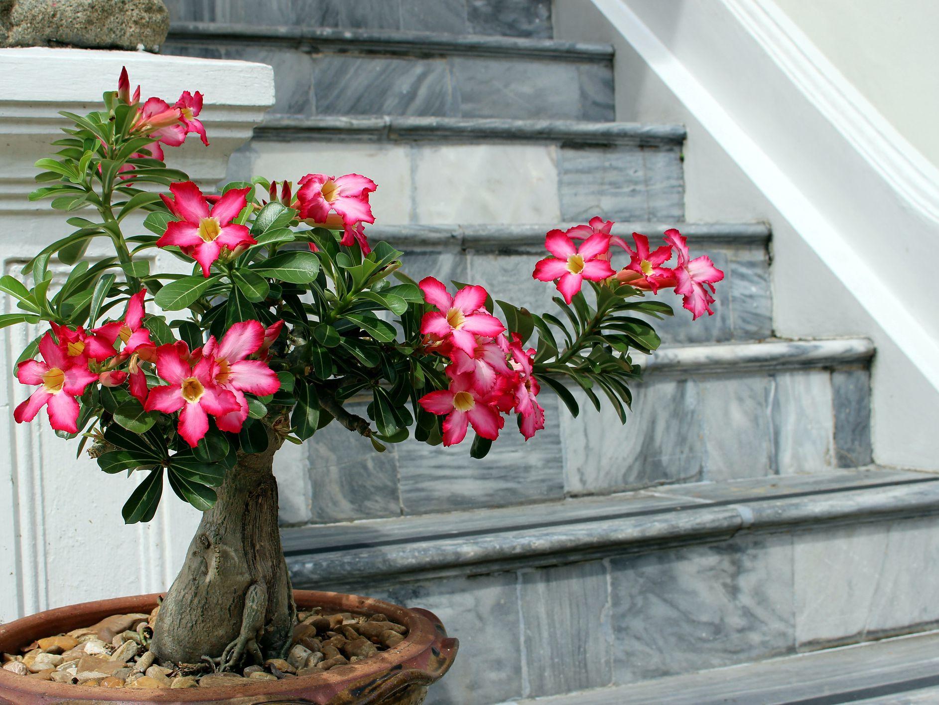 9 Unusual Houseplants To Grow