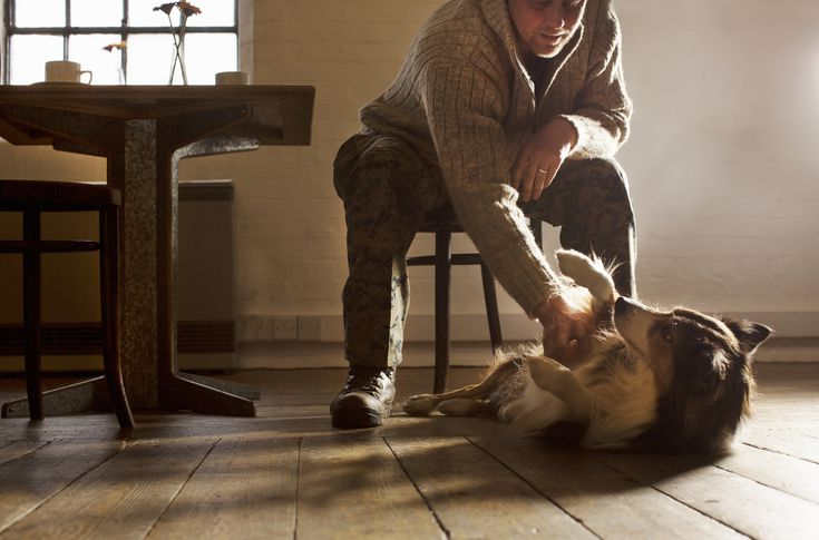 The Best Floors For Dogs