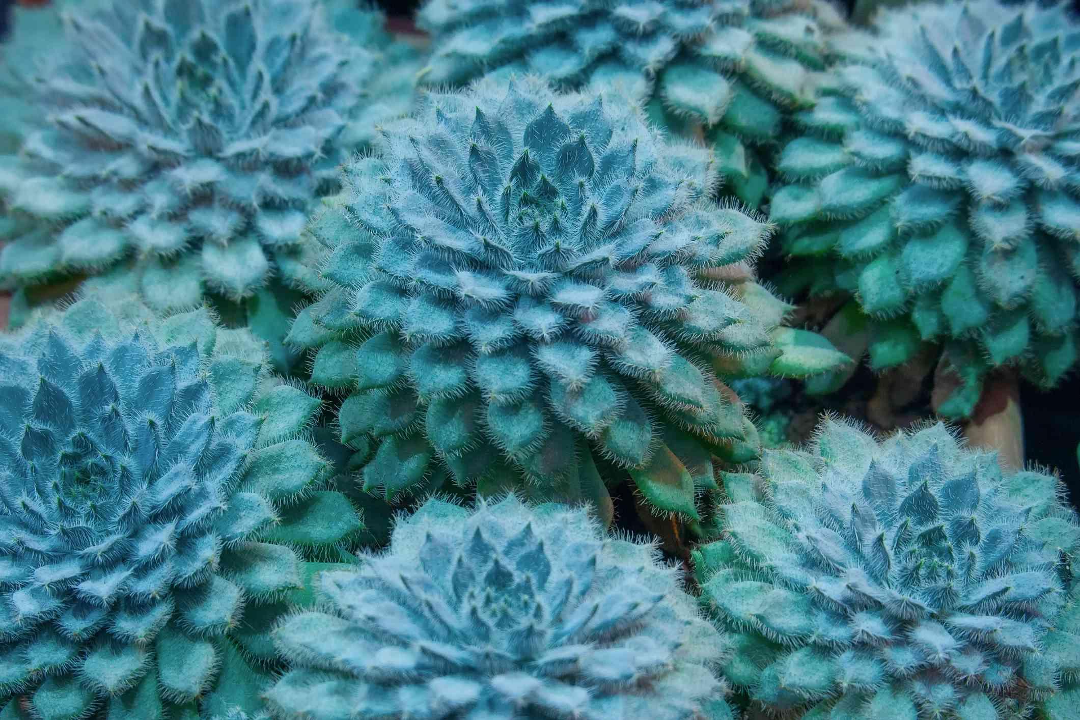 plush plant