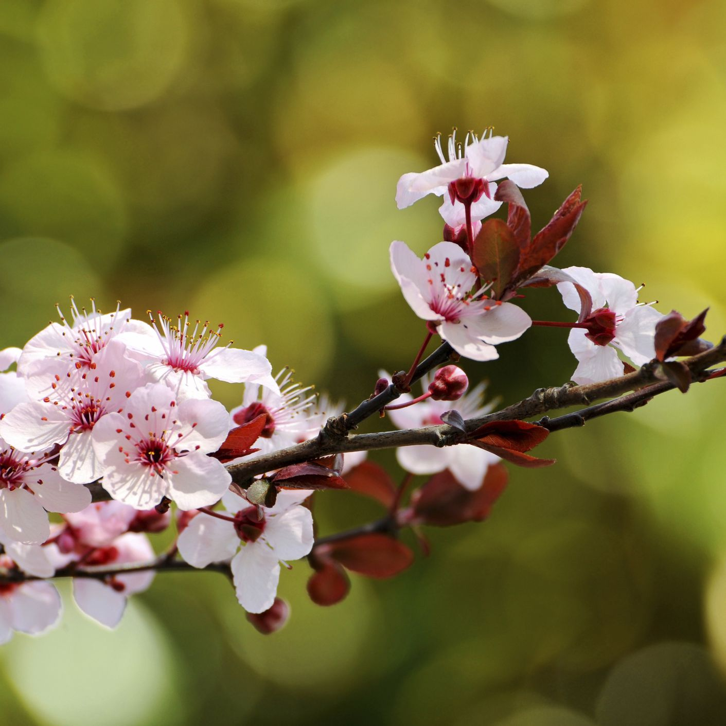 17 Great Flowering Trees For Residential Landscaping