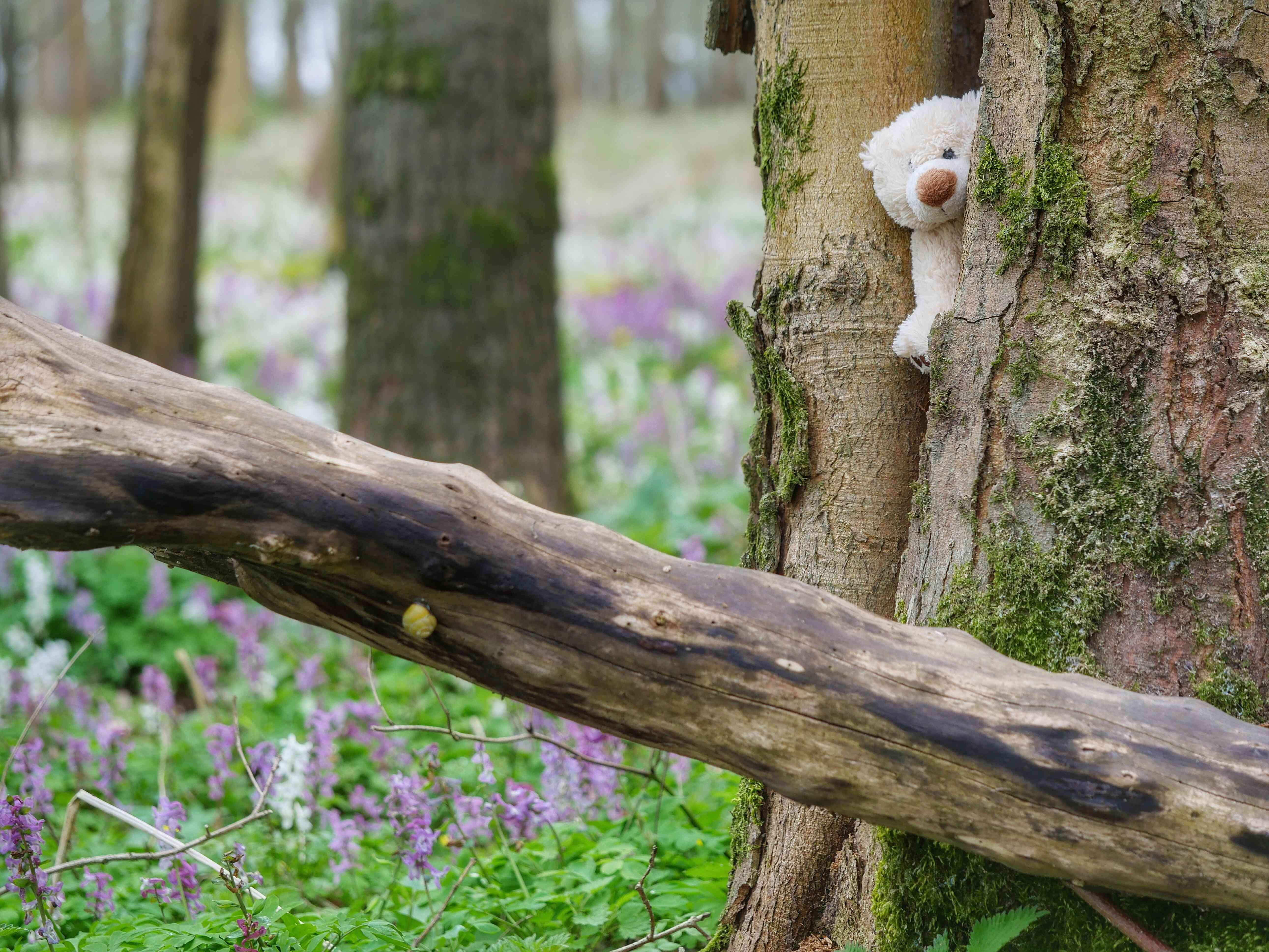 Teddy Bear Stuck Amidst Tree Trunk