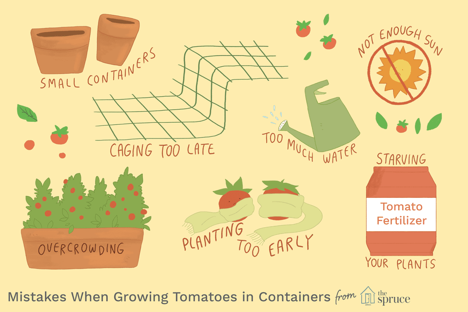 Illustration depicting tomato growing mistakes