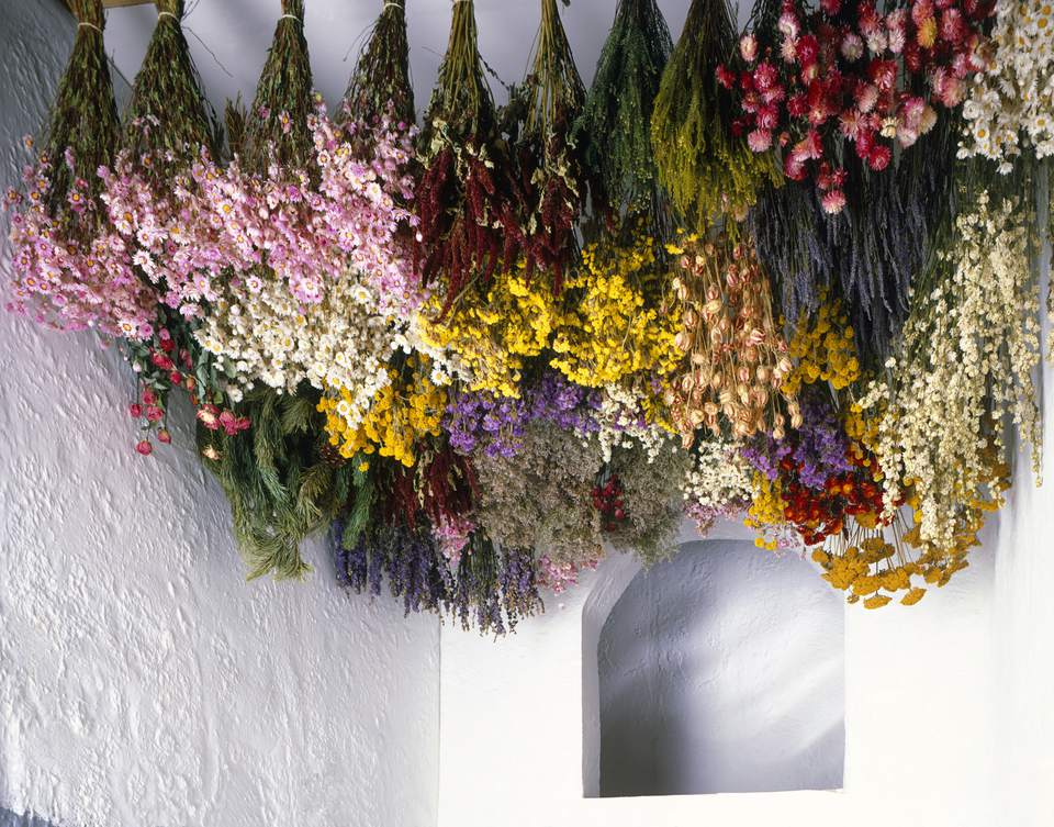 Tips for Harvesting, Drying and Storing Flowers