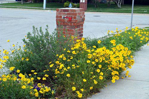 Yellow Mailbox Garden