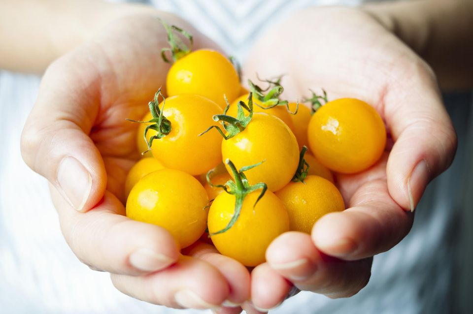 Handful of sungold tomatoes