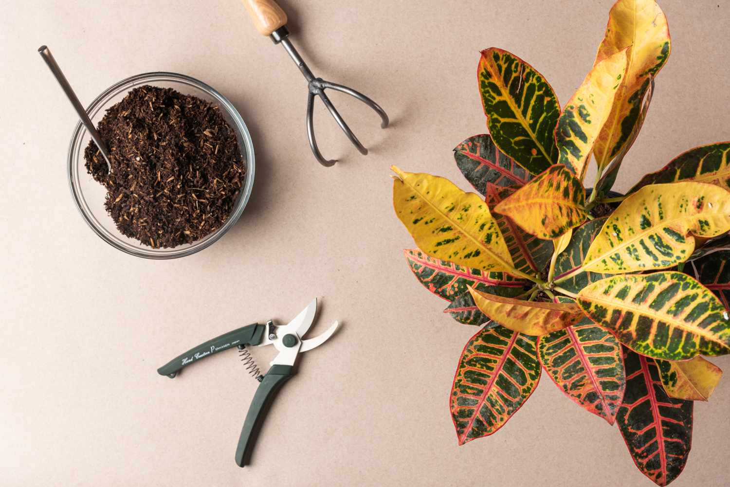 caring for a rootbound plant materials