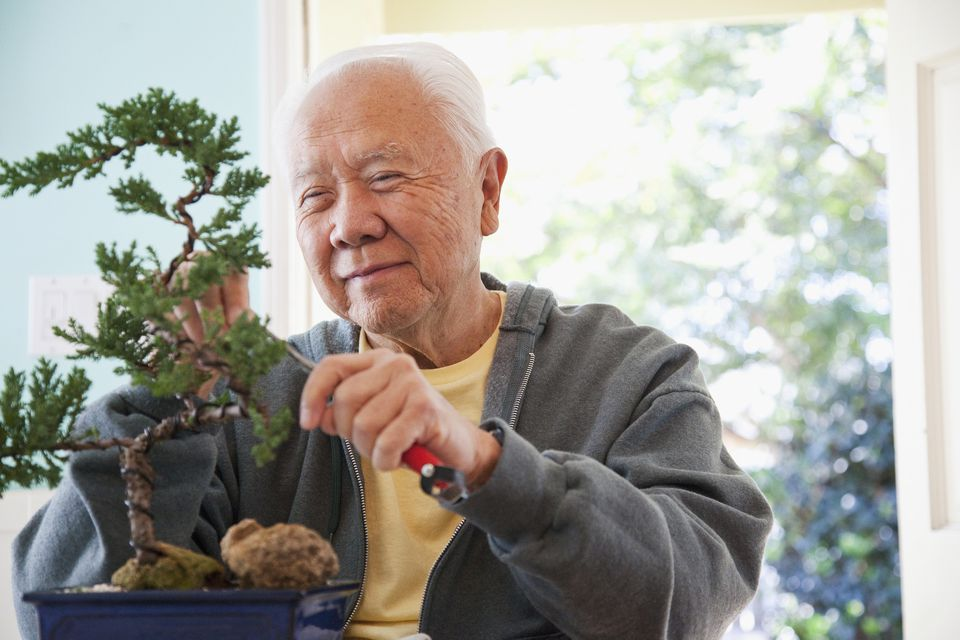 Man pruning bonsai tree