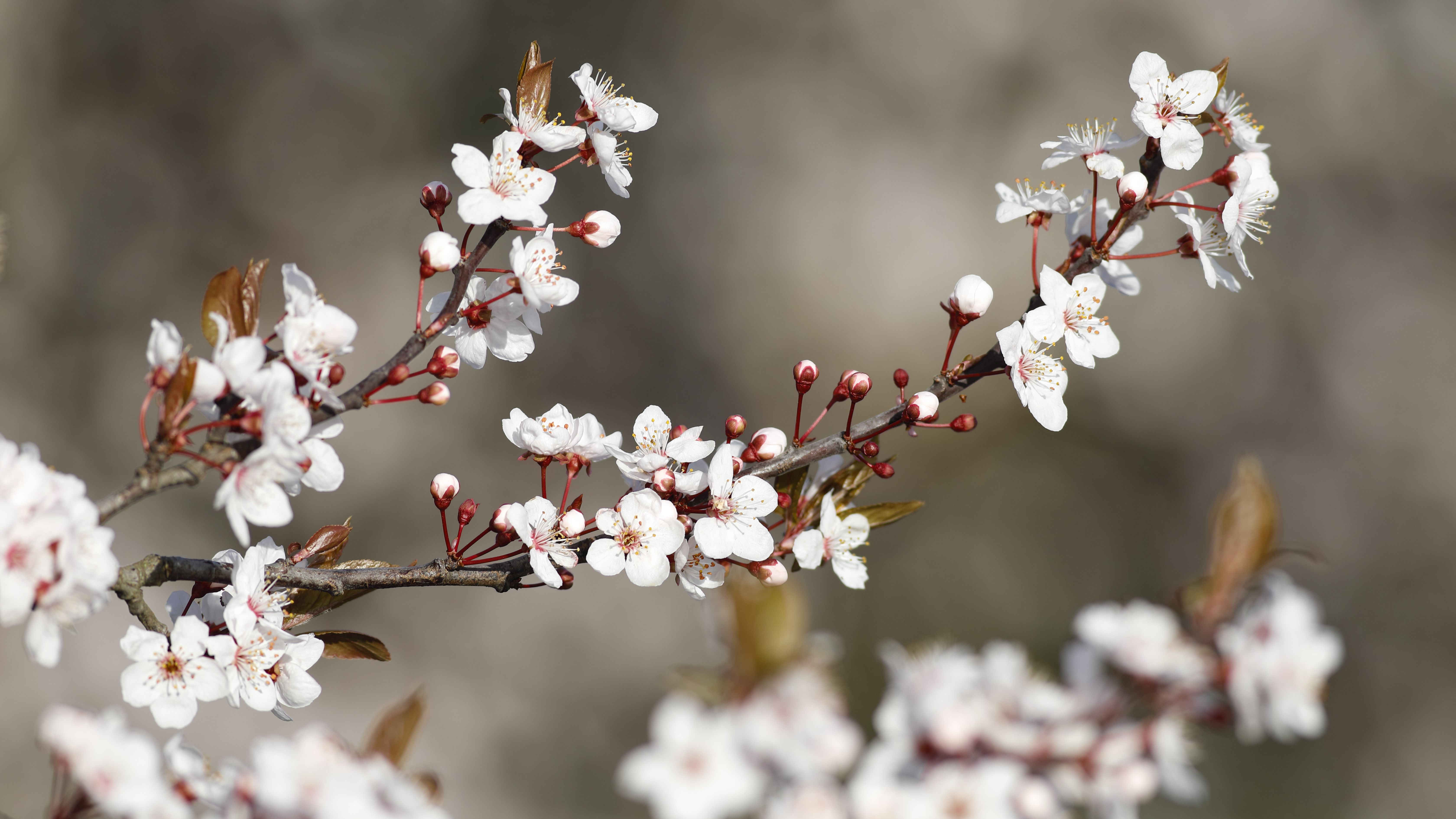 Best Fragrant Trees For Your Landscaping