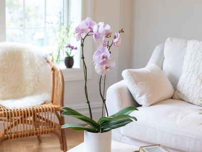orchid blooming