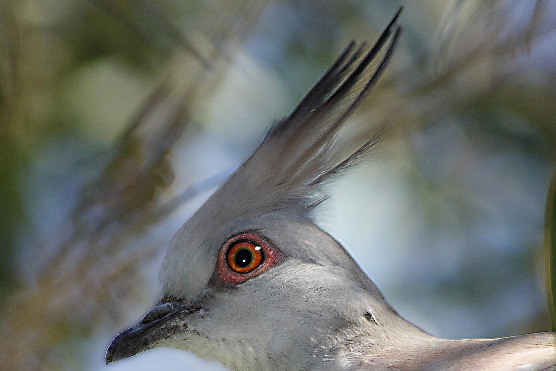 Crest Definition Bird Anatomy And Plumage