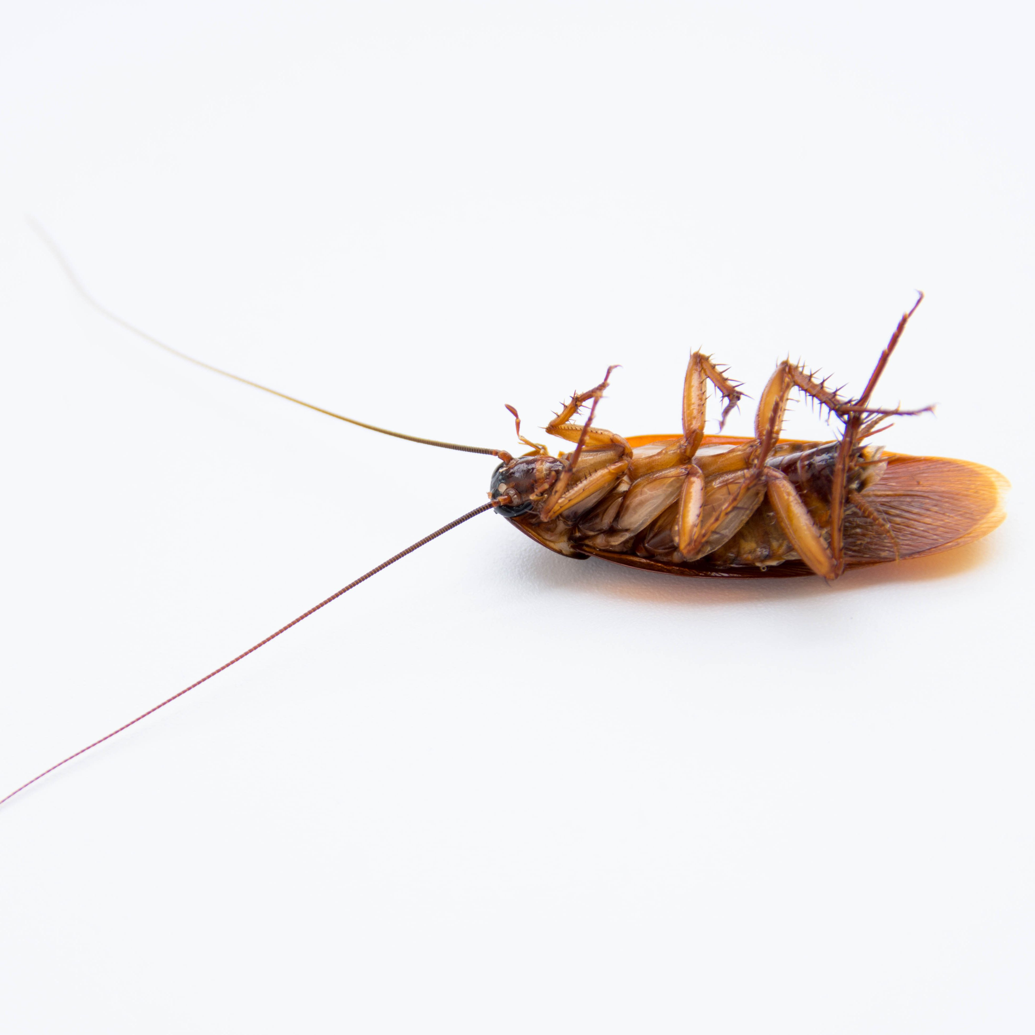 The 8 Best Roach Traps of 2019