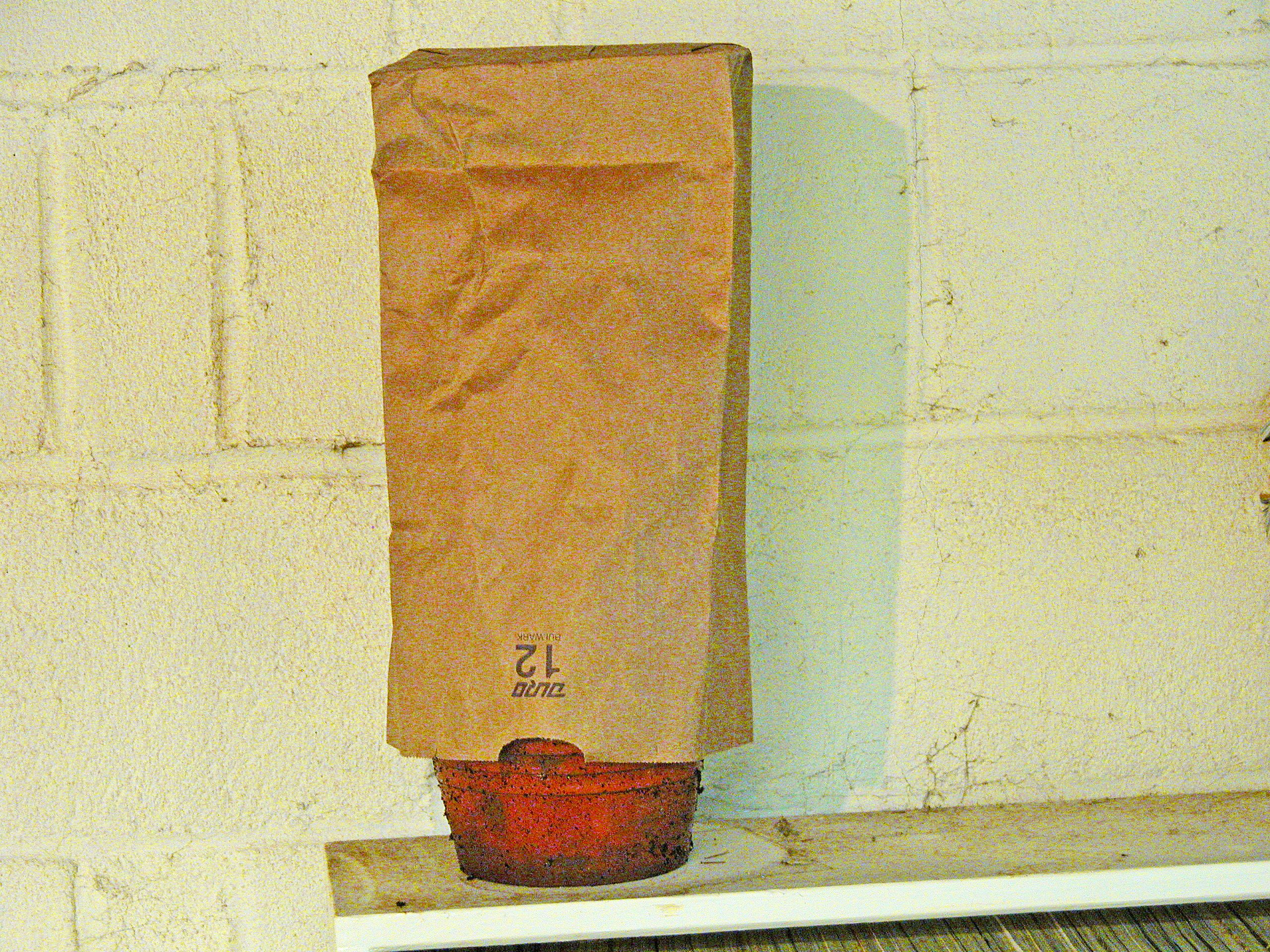 Storing potted geraniums in a paper bag