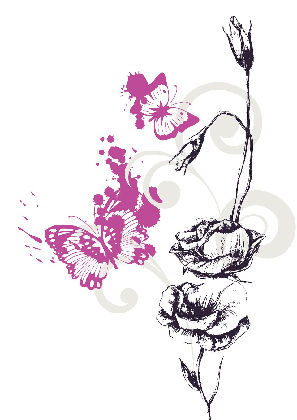 A beautiful drawing of a butterfly and a rose