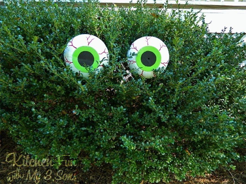 Spooky eyes in a bush