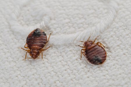 If A Friend S Home Had Bed Bugs What To Do